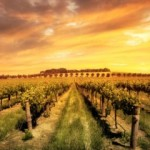 Hunter Valley Wineries With Gourmet Lunch