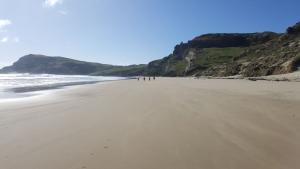 Beach - Pitt island