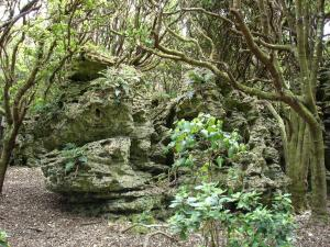Henga Scenis Reserve - Chatham Island