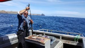 Blue cod Pitt Island